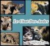 Le-Chat-Des-Andes