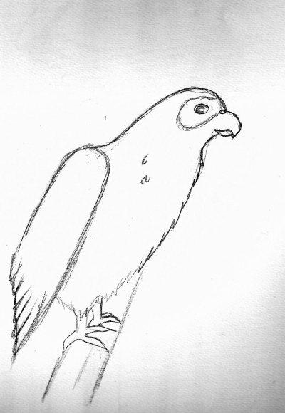 Tori (oiseau)