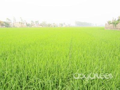 ..Ninh Binh Town..