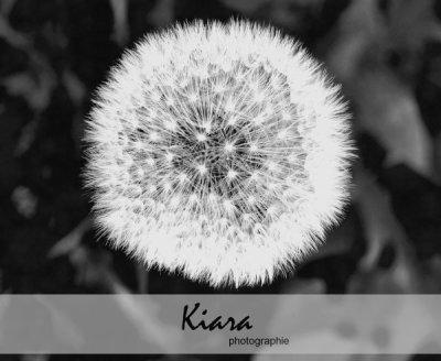 kiara-photographie