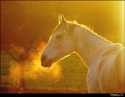 Equine-Photographies