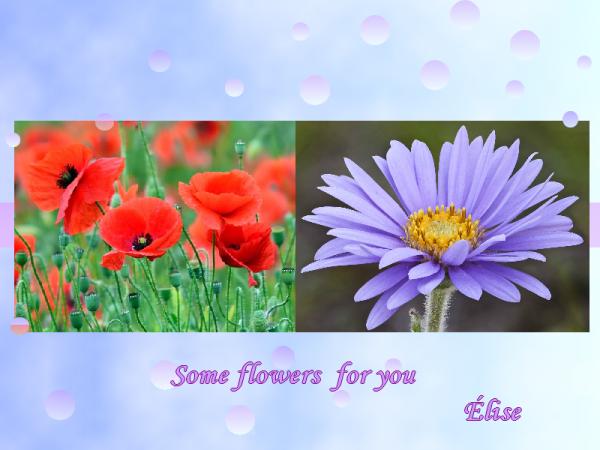 Quelques petites fleurs pour vous