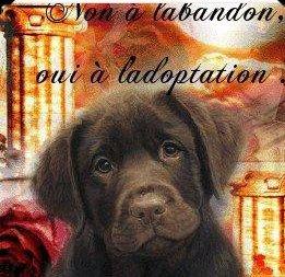 2) L'adoption ou l'achat en animalerie