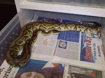 nouveau python
