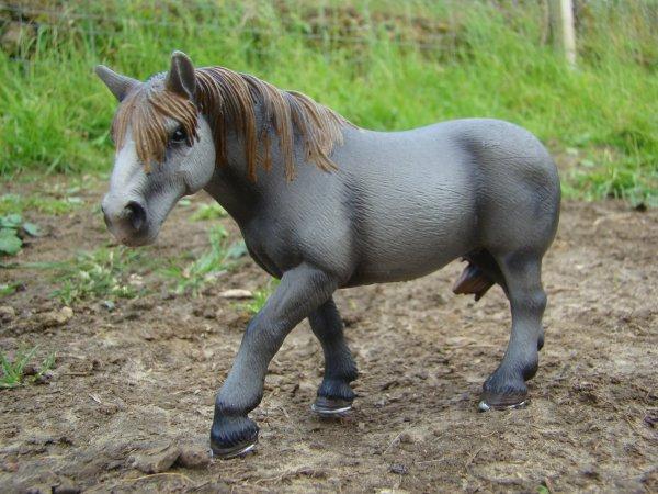 les chevaux de traits