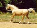 Photo de le-monde-sacre-du-cheval