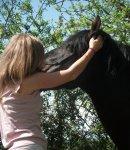 Photo de Libertad-Horse-x3