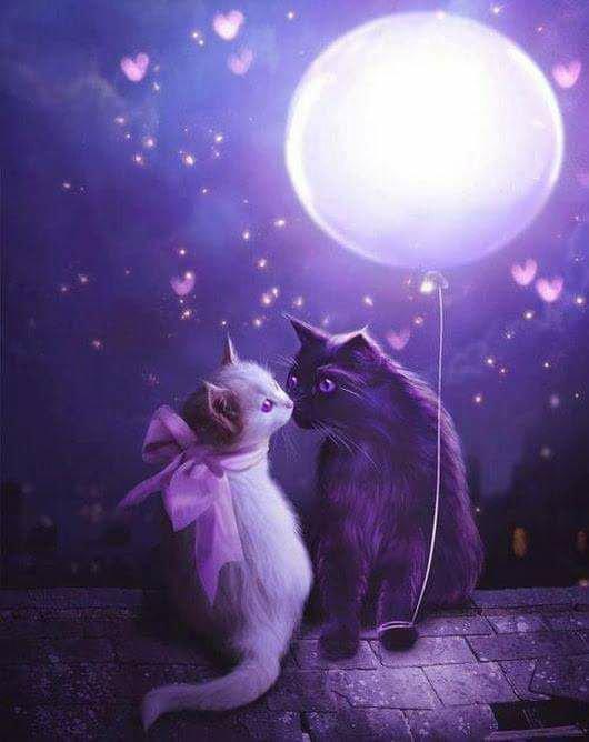 bonne nuit mes amies et amis bisous
