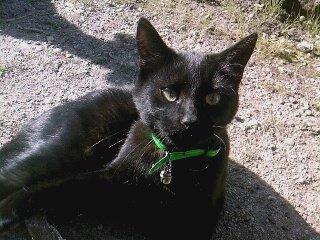 Dobby, mon chaton que j'adore =)