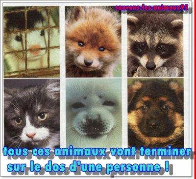 animaux-fourrure