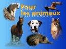 Photo de sauvons-les-animaux95