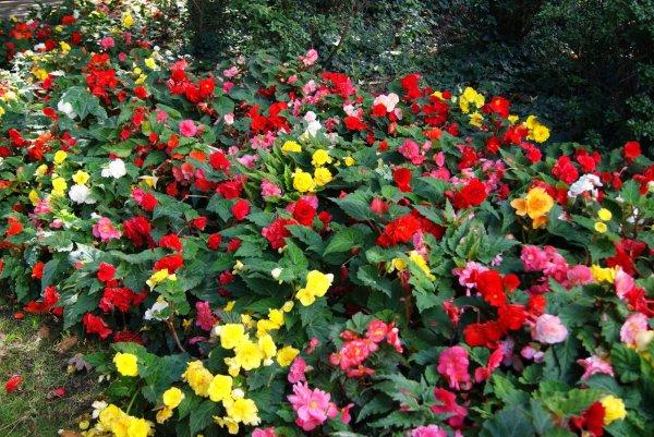 Un beau massif de fleurs pour nos beaux yeux yoyo il se trouve dans un parc a nantes - Massif de fleurs photos ...