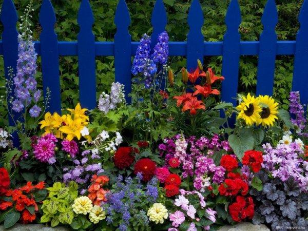 beau parterre de fleurs avec ces belles couleurs blog de kiki28000. Black Bedroom Furniture Sets. Home Design Ideas