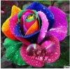 pour vous cette belle rose