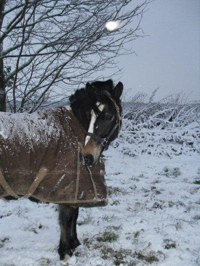 hiver 2010