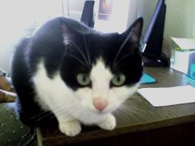 mon chat le roi de la maison ...