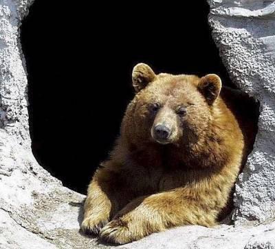 bienvenue dans notre univers  n'ours