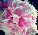 Photo de sakura-romance6