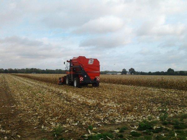 Récolte Maïs pour semence