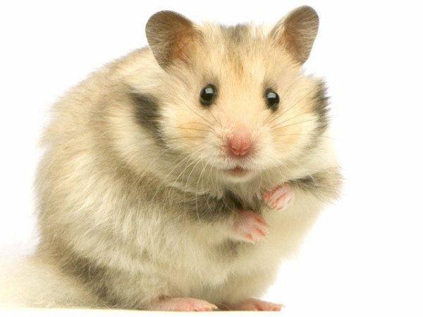 hamsterfan  fête ses 46 ans demain, pense à lui offrir un cadeau.Aujourd'hui à 07:40
