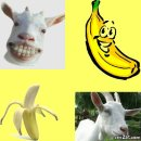 Photo de banana-biquette