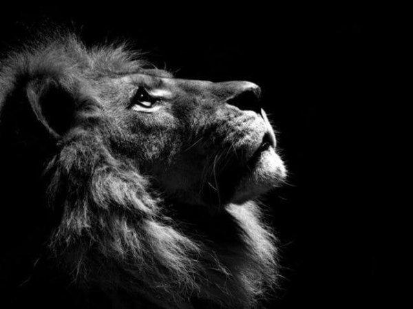 """""""La femme idéale, pour l'homme, est une colombe qui a les qualités de la fourmi ; et l'homme idéal, pour la femme, est un lion avec la patience de l'agneau."""""""