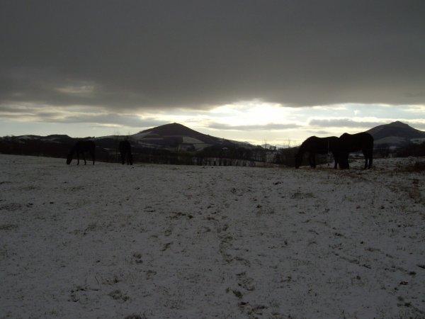 la neige en debut 2010