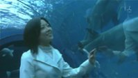 Drama : Japonais Cinderella ni Naritai! 1 épisode SP