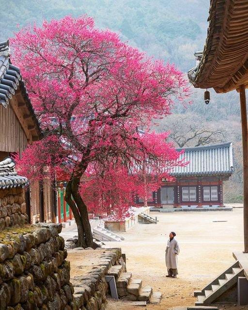 Temple #Haeomsa situé sur les flancs de la montagne Jirisan dans la province de Jeollanamdo