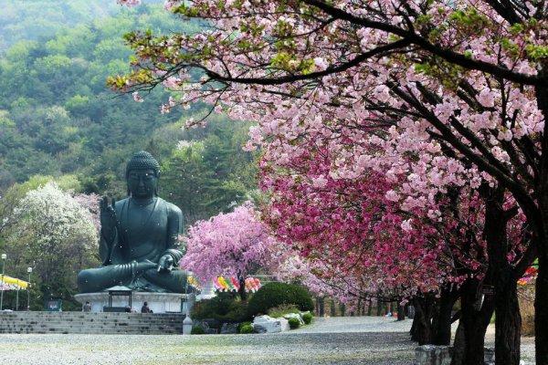Temple #Gagwonsa dans la région de Chungcheongnam-do