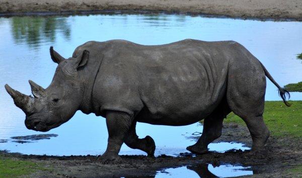 Le Safari park , mon moment d'évasion ...
