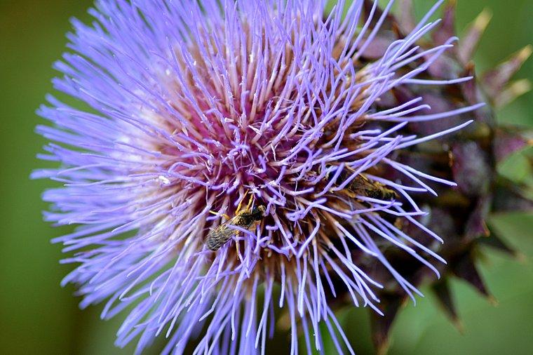 Macrophotographie florale