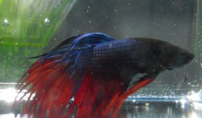 Le retour... des poissons!