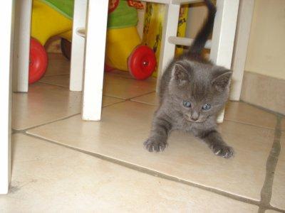 Une nouvelle recrue.. Kitty !