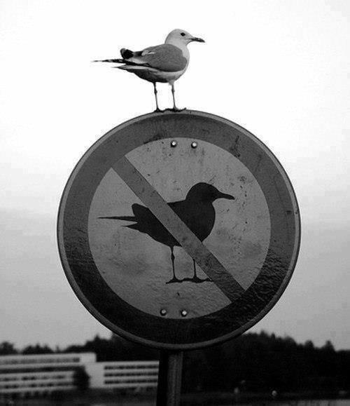 c'est ça être rebelle !