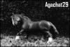 agachat29