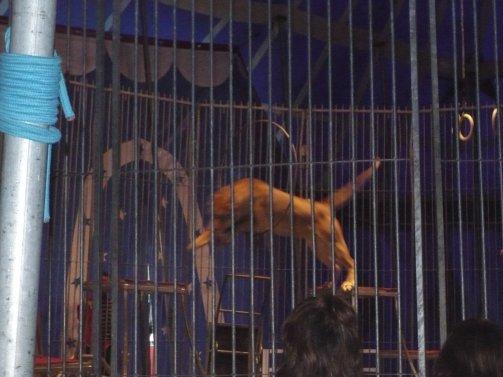 Reportage Nouveau cirque Triomphe 2008 (spectacle) suite