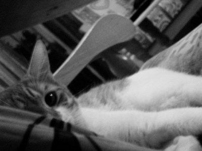 Quand t'essaye de prendre en photo un chat