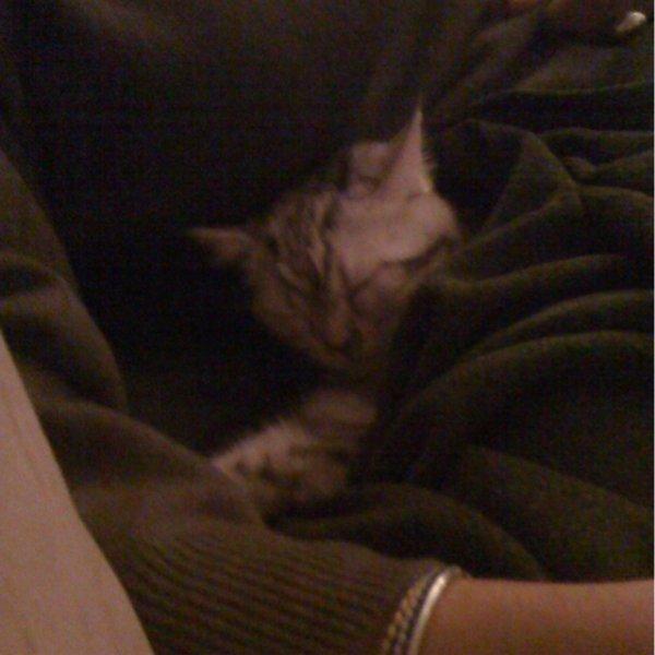 mon nouveau chat!!