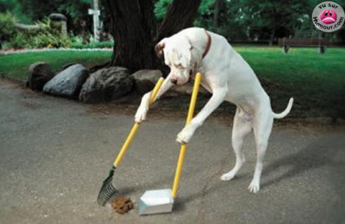mdr le chien et payer 900 euro pour sa