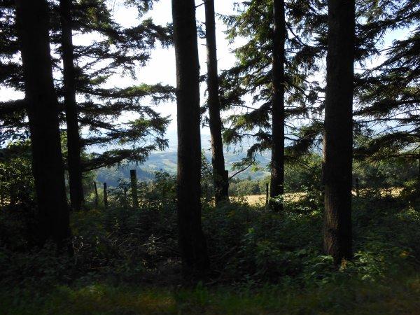 Monts du Lyonnais (juillet 2012)