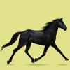 Equideow : Races : Chevaux