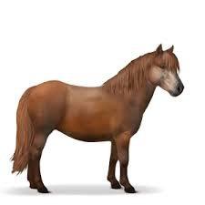 Equideow : Races :  Poneys