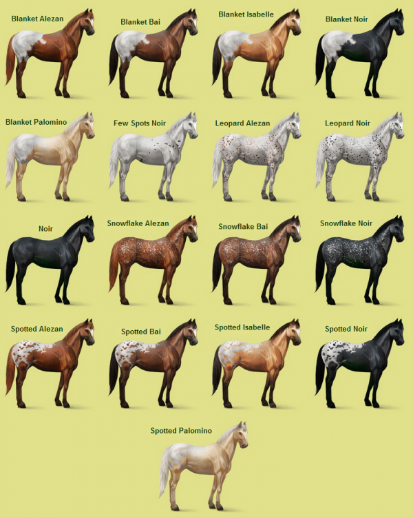 Equideow : Races : Appaloosa