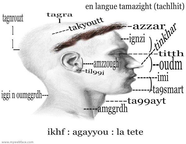 la tete : ikhf : agayyou (langue berbere sous maroc)