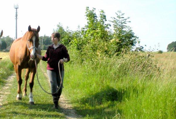 """"""" Je vois parfois, dans le regard d'un cheval, la beauté inhumaine d'un monde d'avant le passage des hommes. """" ---   . Bartabas."""