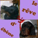 Photo de i-love-gordon-setter