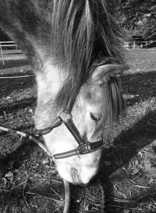 Presentation du cheval <3