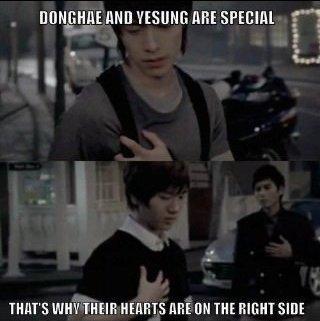 Yesung et Donghae sont spéciaux...