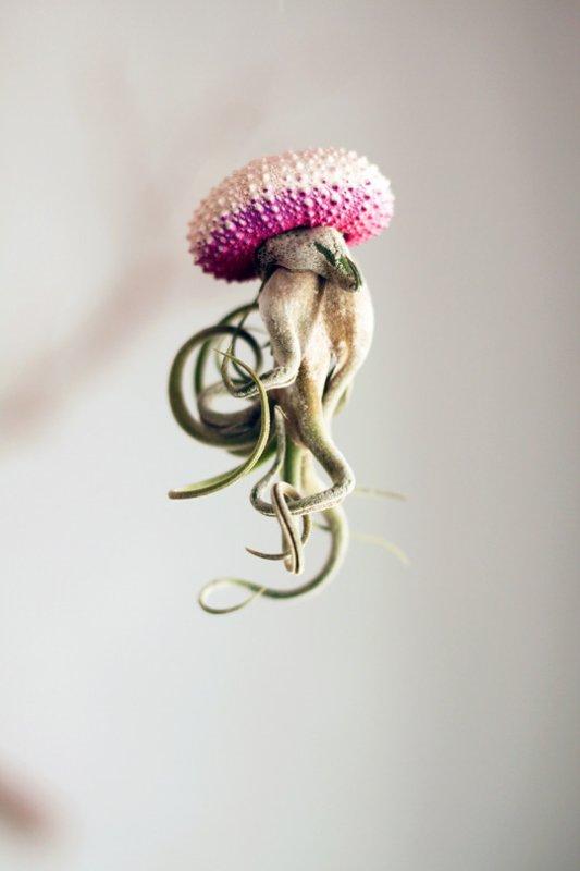 Amy  -  Méduses vegetales
